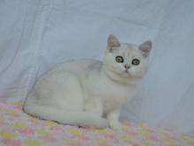 Magnolia Diamond Breese